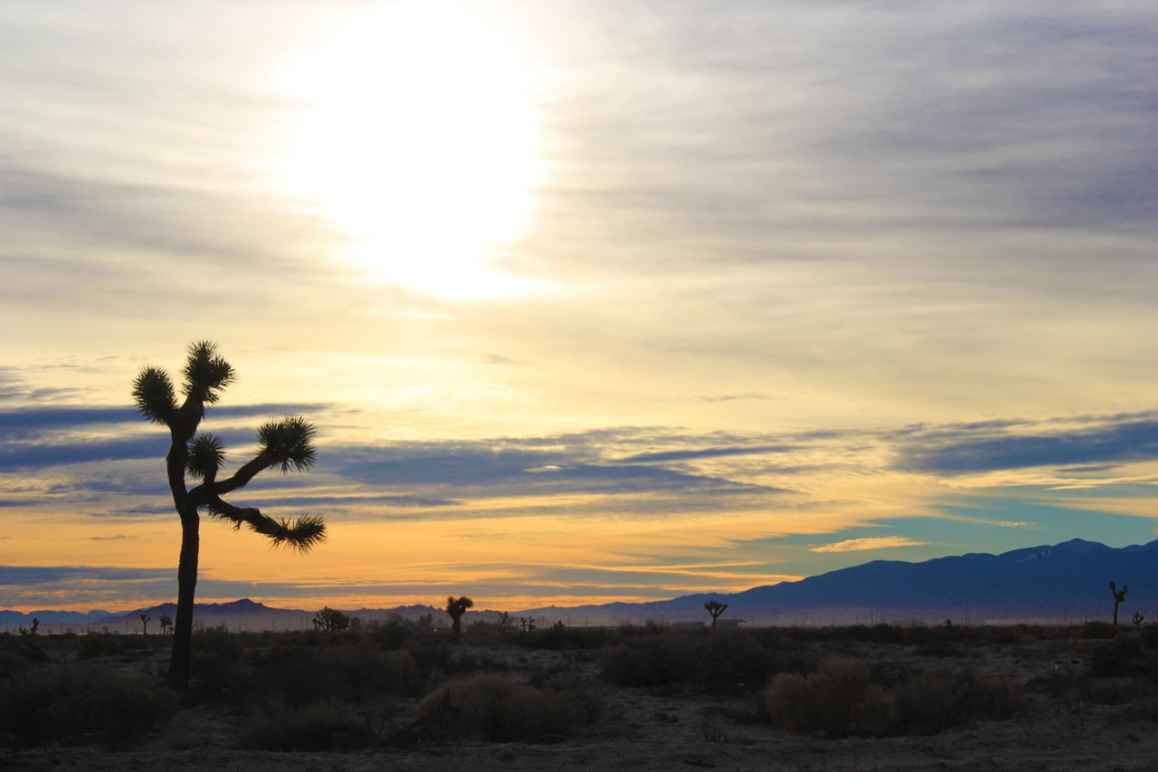 Antelope Valley, Joshua Tree sunset
